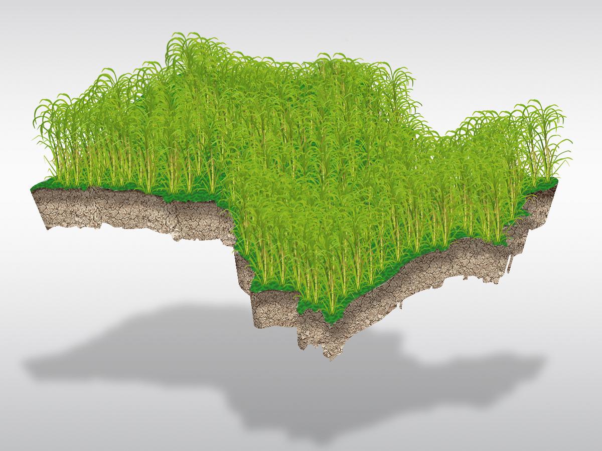 São Paulo responde por 55% da área plantada de cana